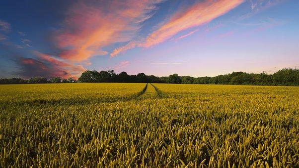 Finanziamento a Tasso agevolato a favore delle imprese agricole per la formazione di scorte.